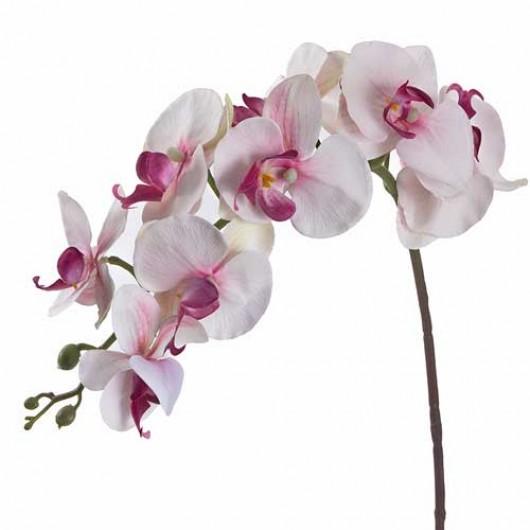 Φαλένοψις  σε λευκό και μοβ χρώμα 97cm