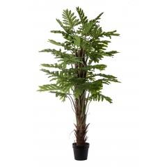 Φυτό ύψους 1,70cm