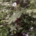Δέντρο Black Hills 200cm